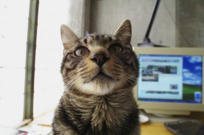 野良猫のクー