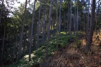 8:47 松笠山から薮こぎで下る