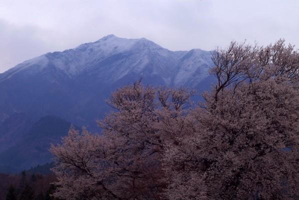 阿蘇 一心行の大桜