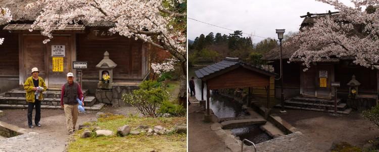 銀鱗湖の湖畔にある下ん湯の前は桜が満開
