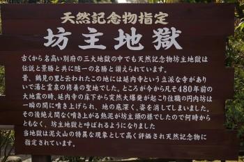 2009_03_31_asosakura024