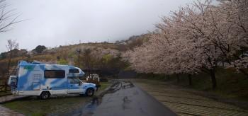 桜の神話の里公園