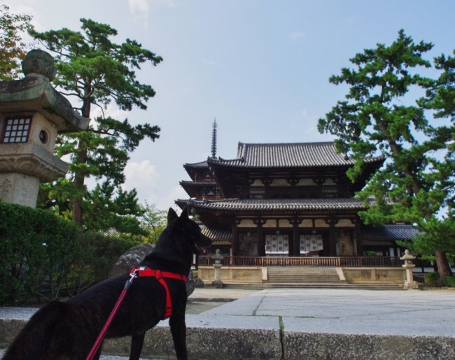 カイの法隆寺散策