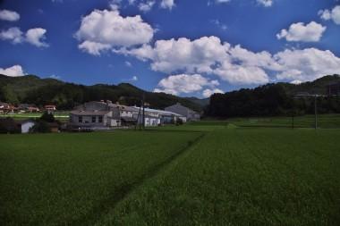緑の稲穂に青い空 でも少し秋空のような雰囲気