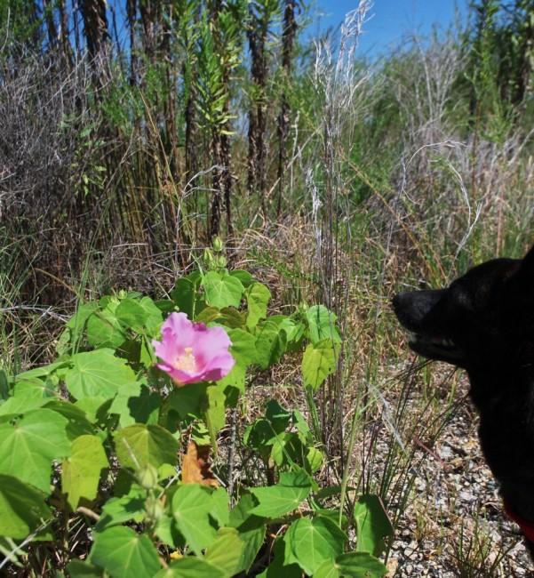 雑草の中に花が一輪