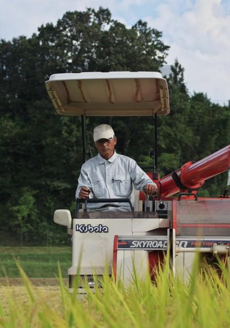黄金色の稲を刈ります