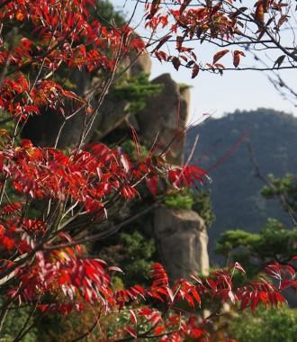 紅葉した木々も少し