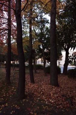木立も冬を待っている