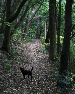 森の道でカイが待っている