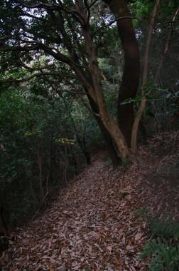 散歩道は落ち葉の絨毯