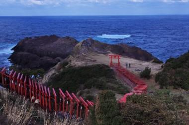断崖の上には元乃隅稲荷陣社があり鳥居が並んでいます