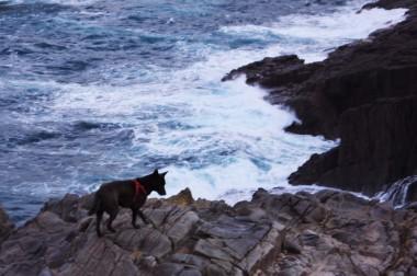 カイも断崖の上を見学中