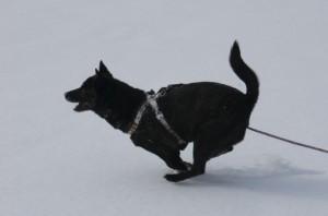 カイは雪原で大喜び