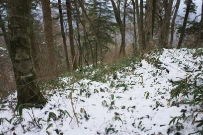 雪の中四本杉へ下る