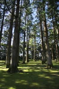 飫肥杉と苔のコントラストが素晴らしい