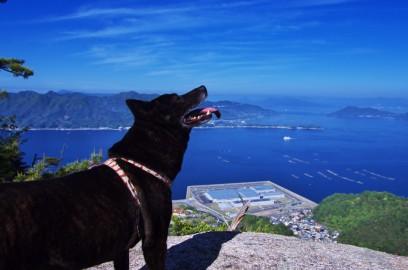 甲斐犬のカイも元気に登る