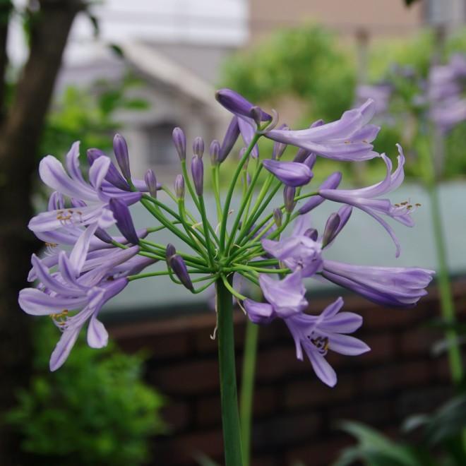 紫色の花が広がっている