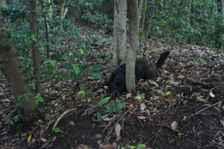 森の中で木々と遊ぶカイ