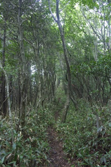 雨で緑が映える尾根道を歩く