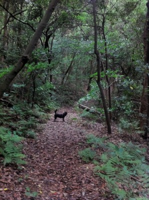 心地よい森の中を散策
