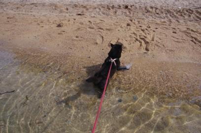 カイは海の波が大嫌い