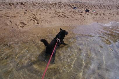 カイも海水浴 かなり嫌がっている