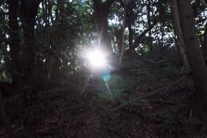 森の中に朝日が昇る