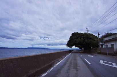 桜島を北側に回る アコウ群が道を覆う