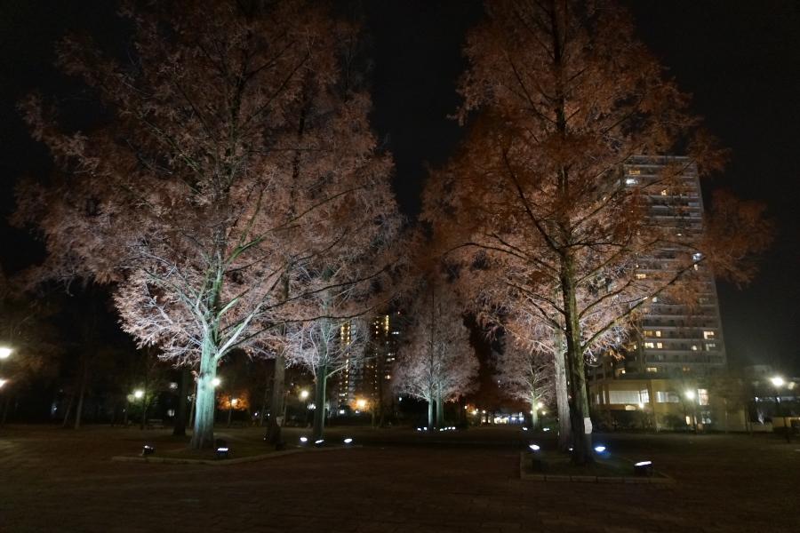 千田町の広大跡地の公園を歩く