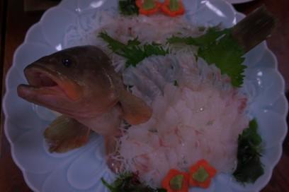 追加のアコウの刺身 幻の魚