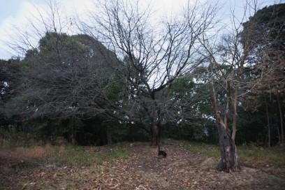 宇品の高射砲陣地の跡 木々が寒そう