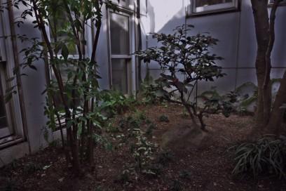 中庭の落ち葉とゴミの片づけ かなり手間取る