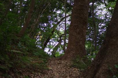 いつもの元宇品の森の遊歩道