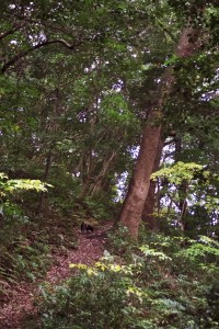 森の遊歩道 クスノキの中を歩く