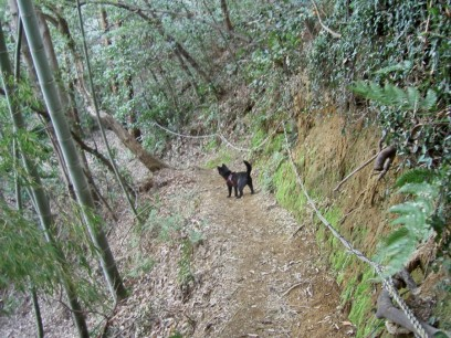 カイと黄金山の登山道を