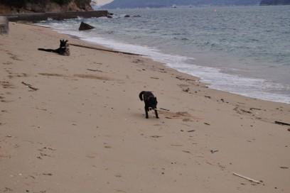 海岸を走って