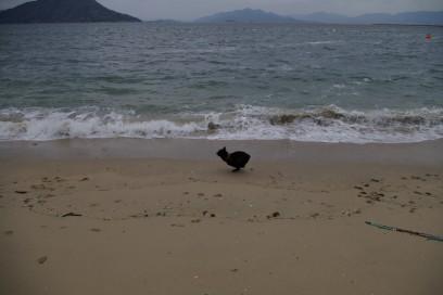 海岸を疾走