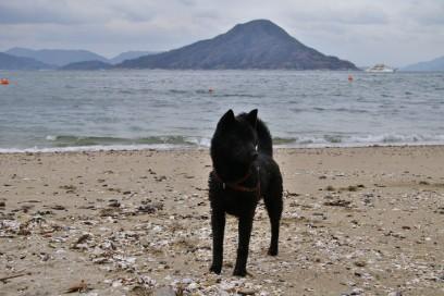 海岸でカイは