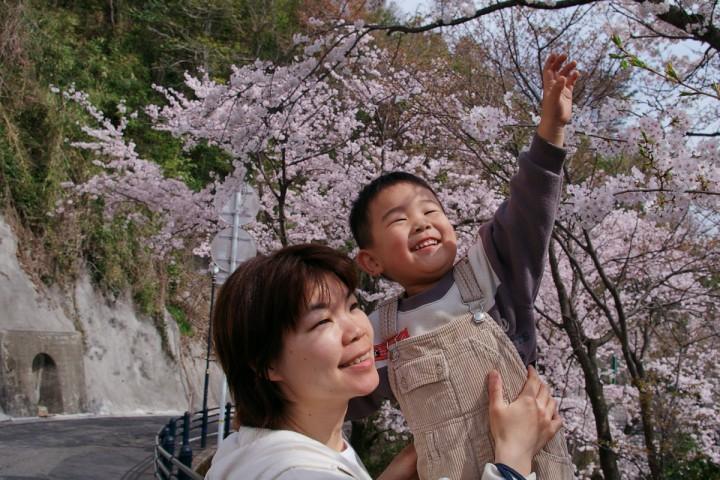 桜の花が綺麗でヒデも大喜び
