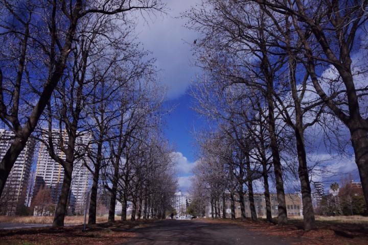 広島大学跡地の公園 大学時代の並木が残る