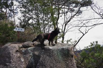 9:54 籏立岩でカイが見下ろしています