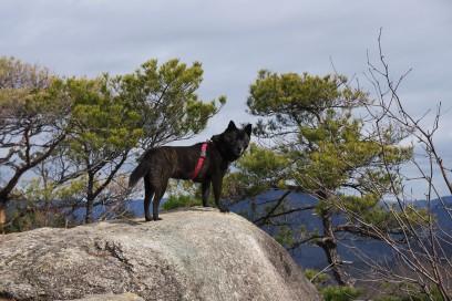 カイは岩場で下界を眺めています