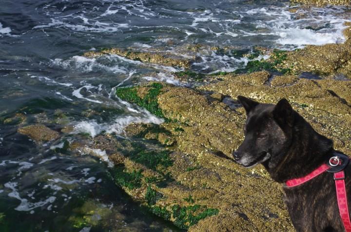 カイと元宇品の海岸を散策