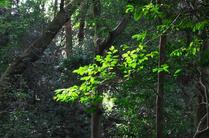 森で朝日に照らされた木々が光る