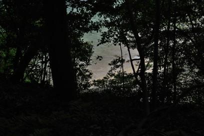 森から眺める波打際が好き