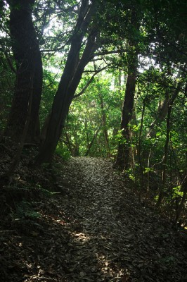 元宇品の森を歩く