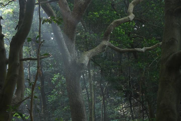 森に朝日が差し込みます