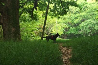 森の中の散策コース