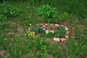 誰かが小さな花壇をつくっていた