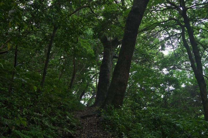雨上がりの森を散策